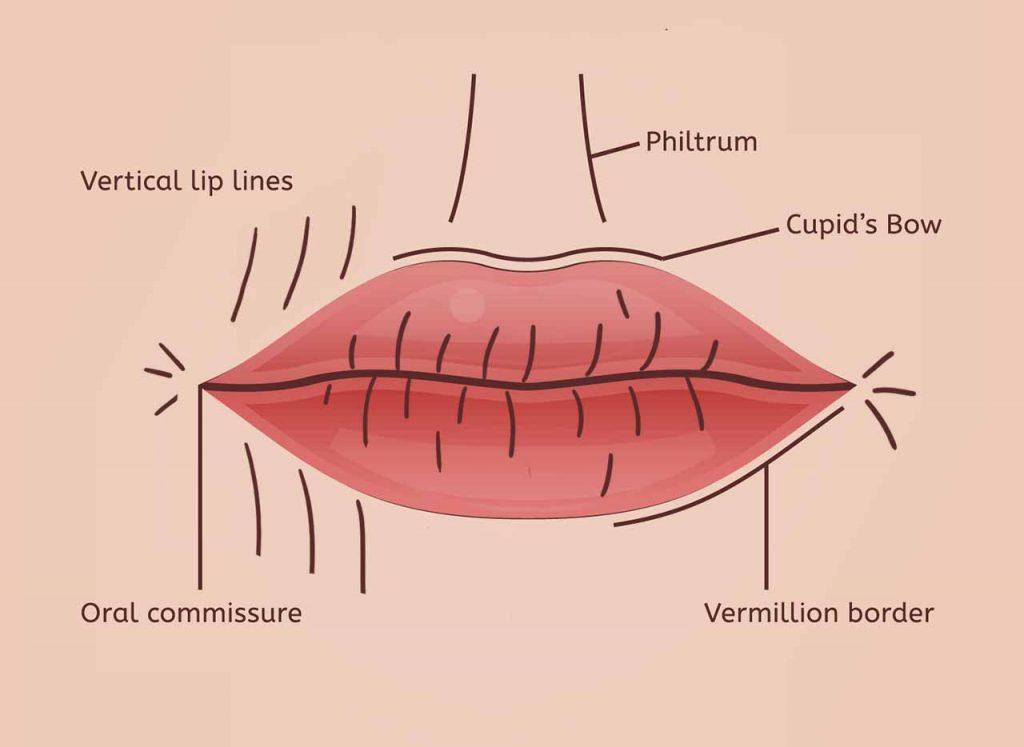 lip smoker lines